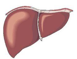 Hepatitis - Leberentzündung